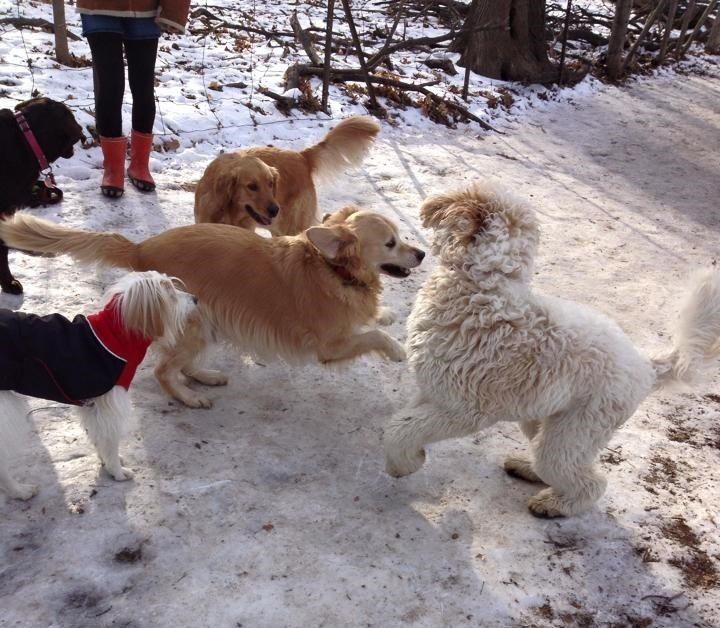 how to become a dog walker in toronto