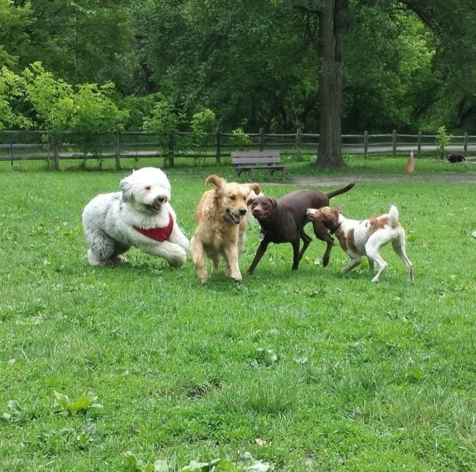 Group Dog Walker