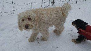 Dog Walker 8
