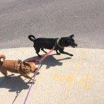 Dog Walker2