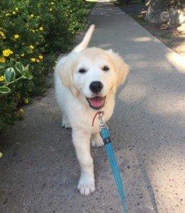 Puppy visit Millie