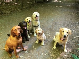 Archer and the gang out on a group walk at SHerwood