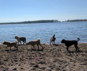 Dog Walker Cherry Beach