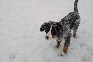 Winnie enjoying the snow