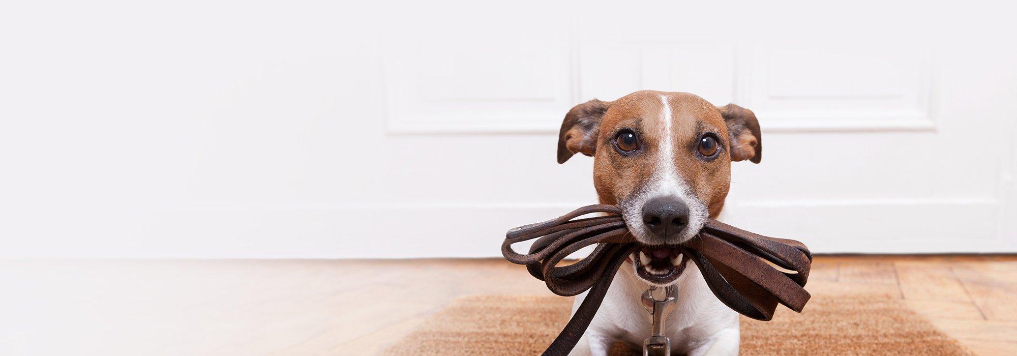 Eglinton dog walker toronto dog walking service for Puppy dog walker